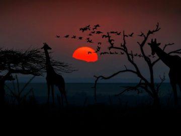 safari in tanzania_800x375
