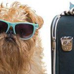 Compagnie aeree che trasportano animali