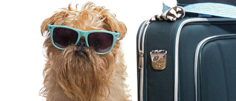 compagnie di volo che accettano cani
