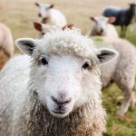 Slow Food: Cos'è quando è nato e i principi sui quali si fonda