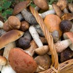Raccolta dei funghi: le cose da sapere