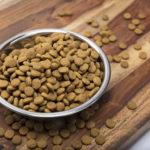Come scegliere la giusta tipologia di cibo per il proprio cane