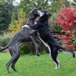 Come fare l'assicurazione del cane