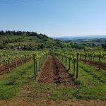Toscana: terra ricca di vini e sapori