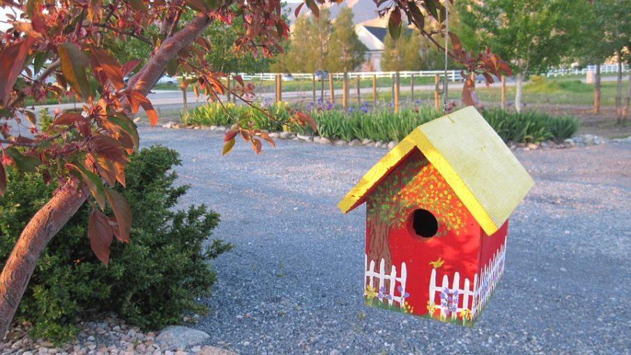 Casette per uccelli dove posizionarle